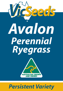Avalon Perennial Ryegrass