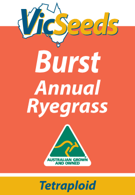 Burst Tetraploid Annual Ryegrass